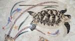 Turtlefinished 011